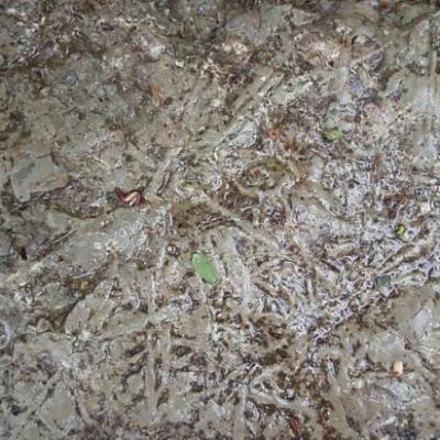 Sortie de géologie à Dogneville