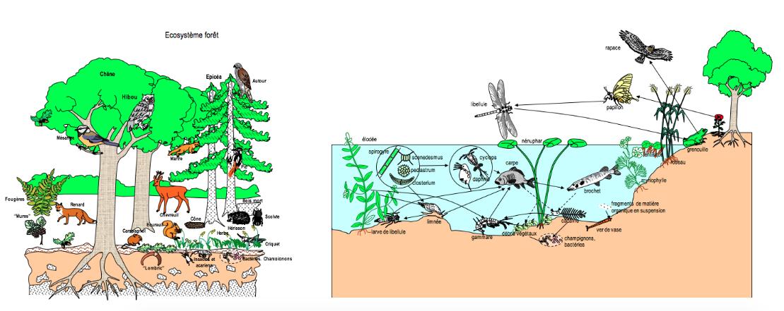 Leçon1 Les Alentours De La Carrière Dhéming Des écosystèmes